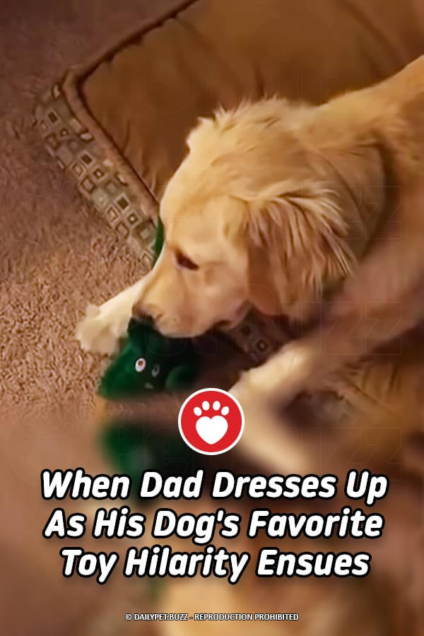 When Dad Dresses Up As His Dog\'s Favorite Toy Hilarity Ensues