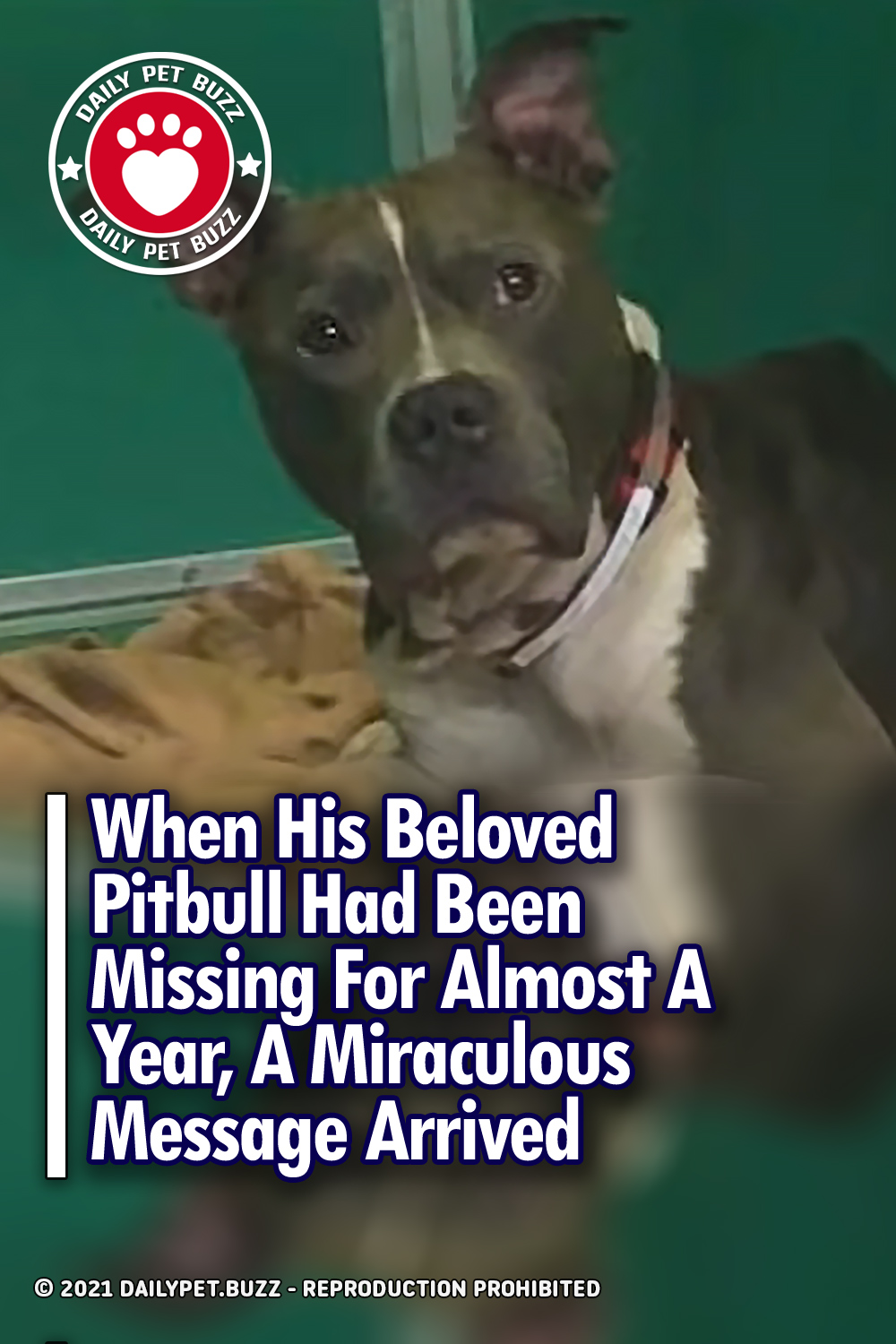 When His Beloved Pitbull Had Been Missing For Almost A Year, A Miraculous Message Arrived