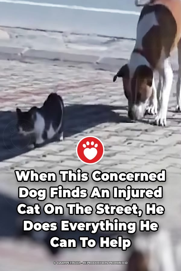 When This Concerned Dog Finds An Injured Cat On The Street, He Does Everything He Can To Help