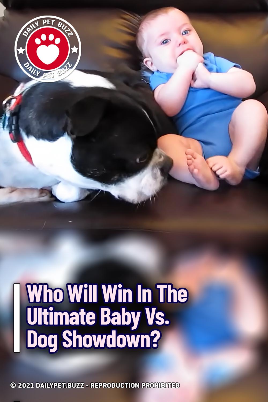 Who Will Win In The Ultimate Baby Vs. Dog Showdown?