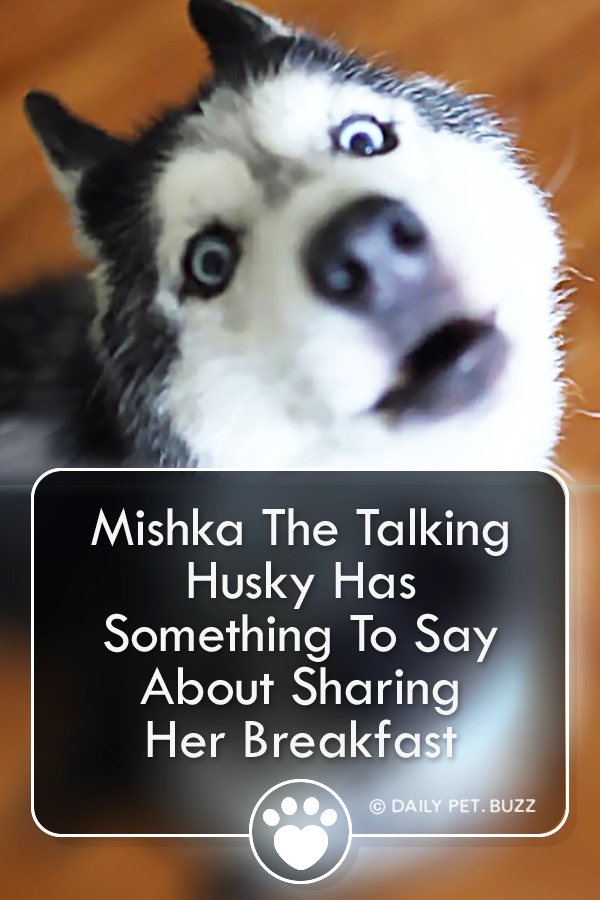 Mishka The Talking Husky Has Something To Say About Sharing Her Breakfast