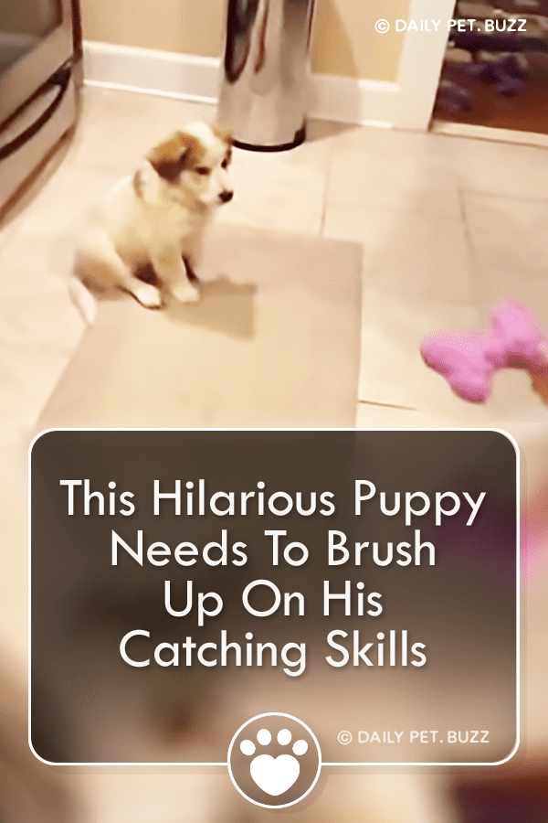 This Hilarious Puppy Needs To Brush Up On His Catching Skills