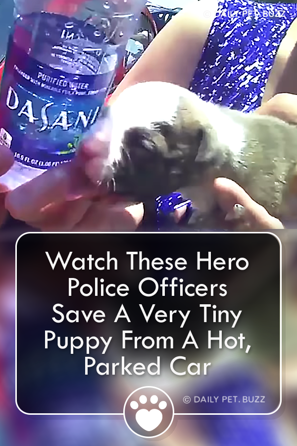 Watch These Hero Police Officers Save A Very Tiny Puppy From A Hot, Parked Car