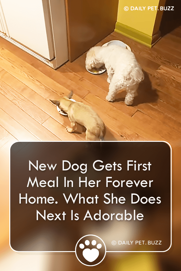 New Dog Gets First Meal In Her Forever Home. What She Does Next Is Adorable