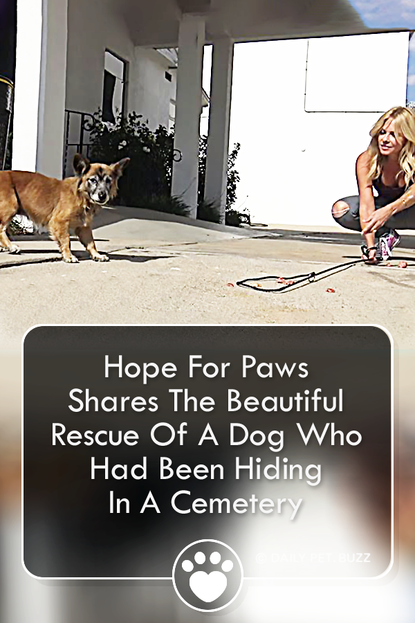 Hope For Paws Shares The Beautiful Rescue Of A Dog Who Had Been Hiding In A Cemetery