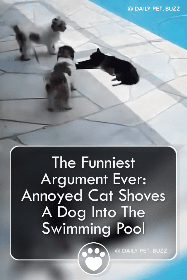 The Funniest Argument Ever: Annoyed Cat Shoves A Dog Into The Swimming Pool