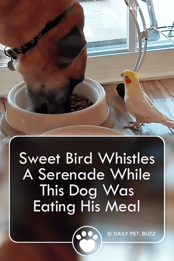 Sweet Bird Whistles A Serenade While This Dog Was Eating His Meal