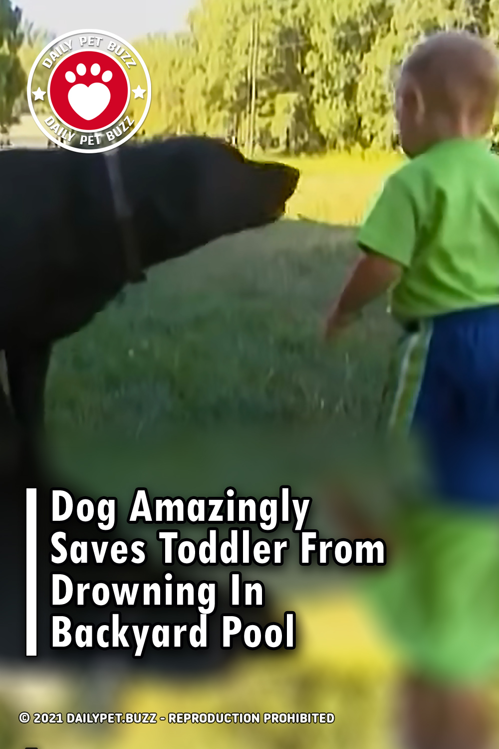 Dog Amazingly Saves Toddler From Drowning In Backyard Pool