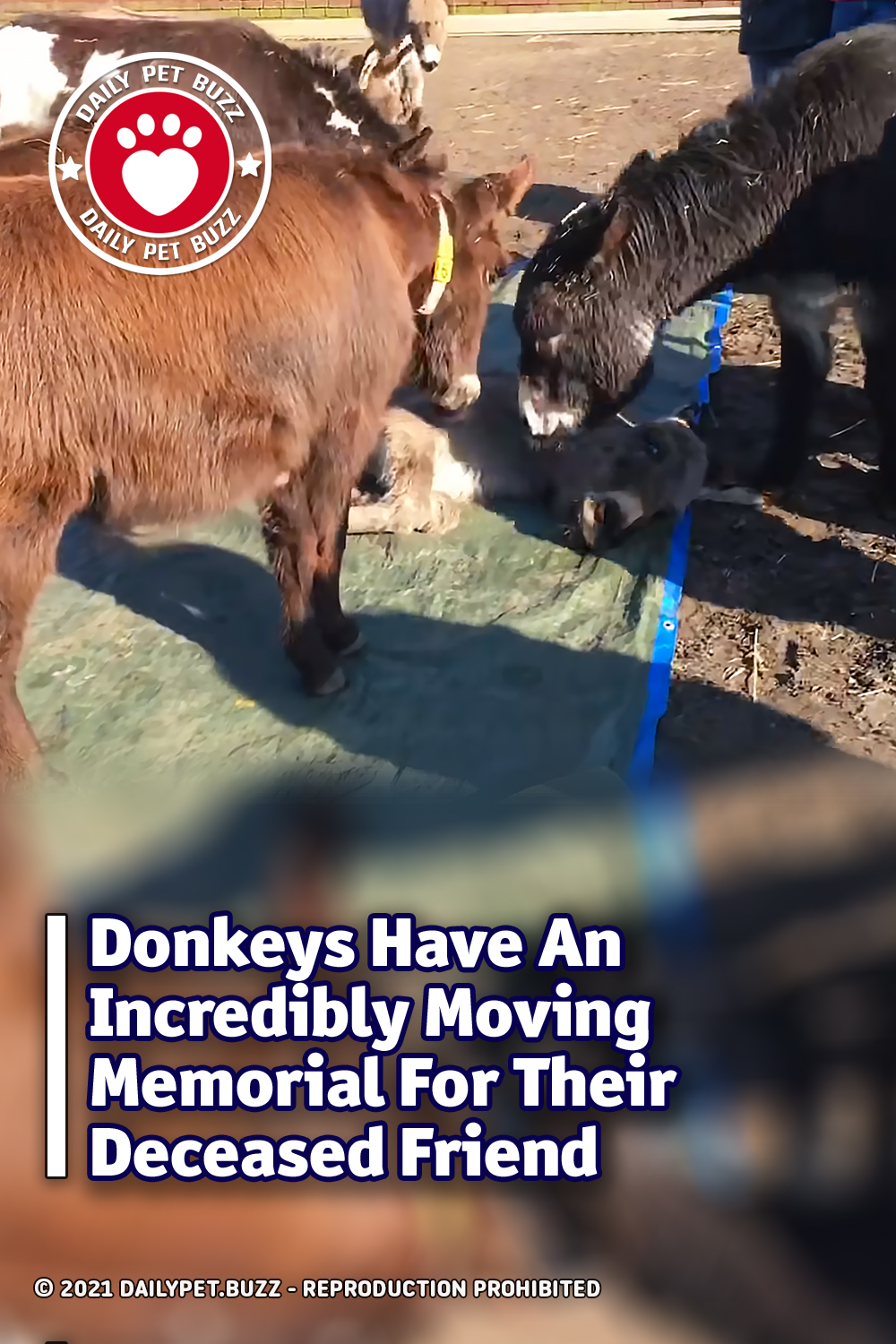 Donkeys Have An Incredibly Moving Memorial For Their Deceased Friend