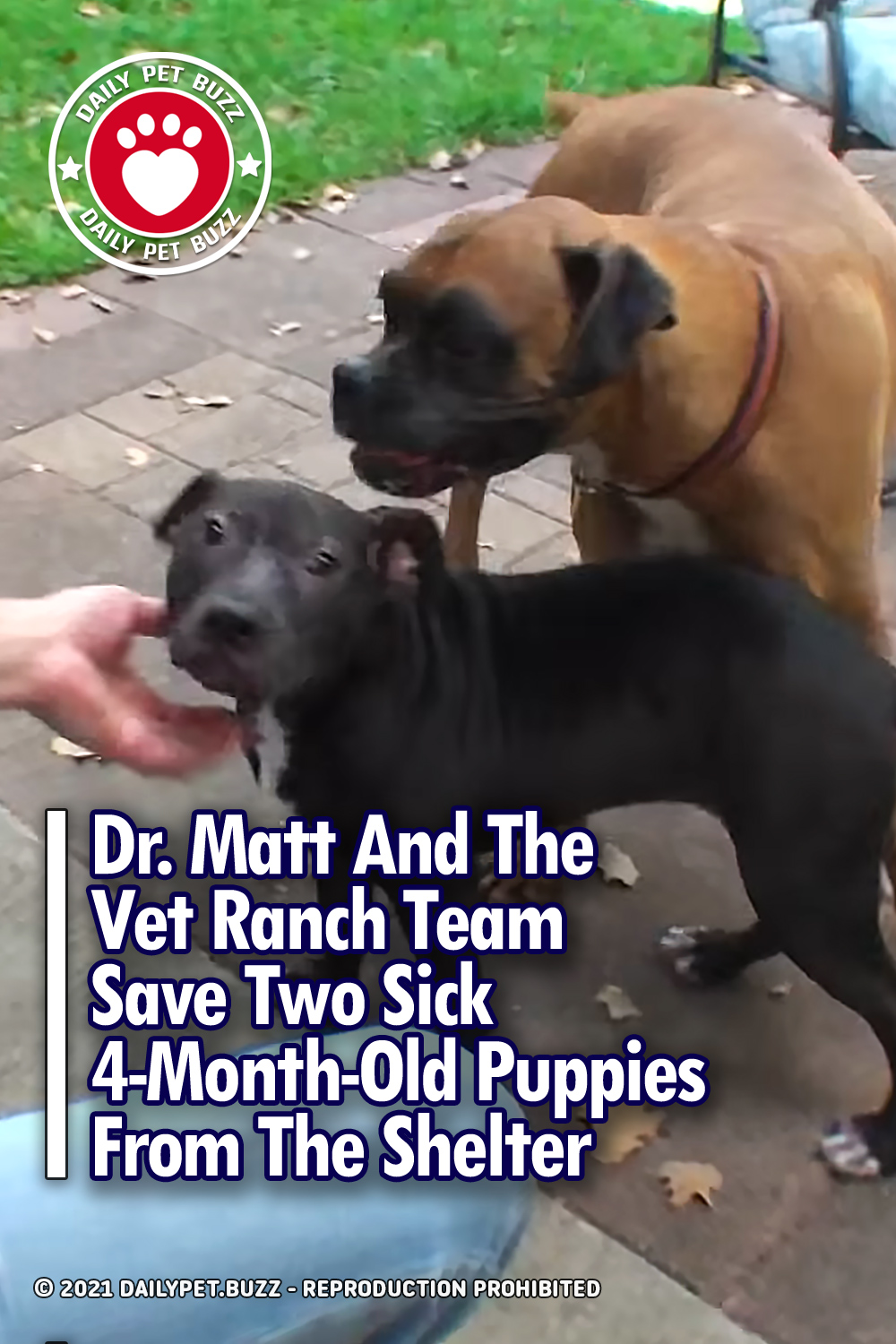 Dr. Matt And The Vet Ranch Team Save Two Sick 4-Month-Old Puppies From The Shelter
