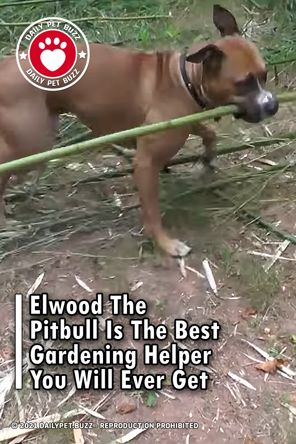 Elwood The Pitbull Is The Best Gardening Helper You Will Ever Get
