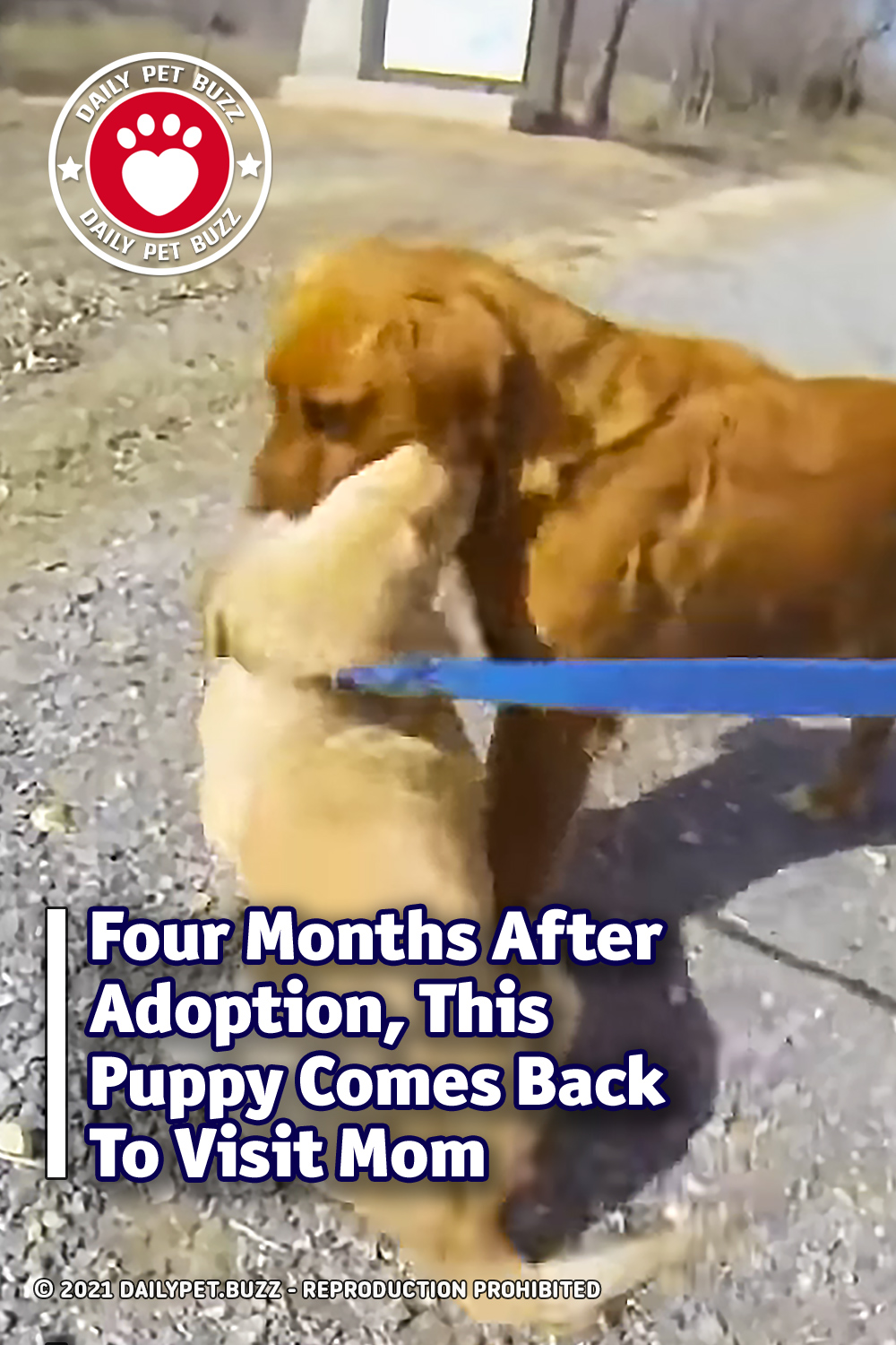 Four Months After Adoption, This Puppy Comes Back To Visit Mom