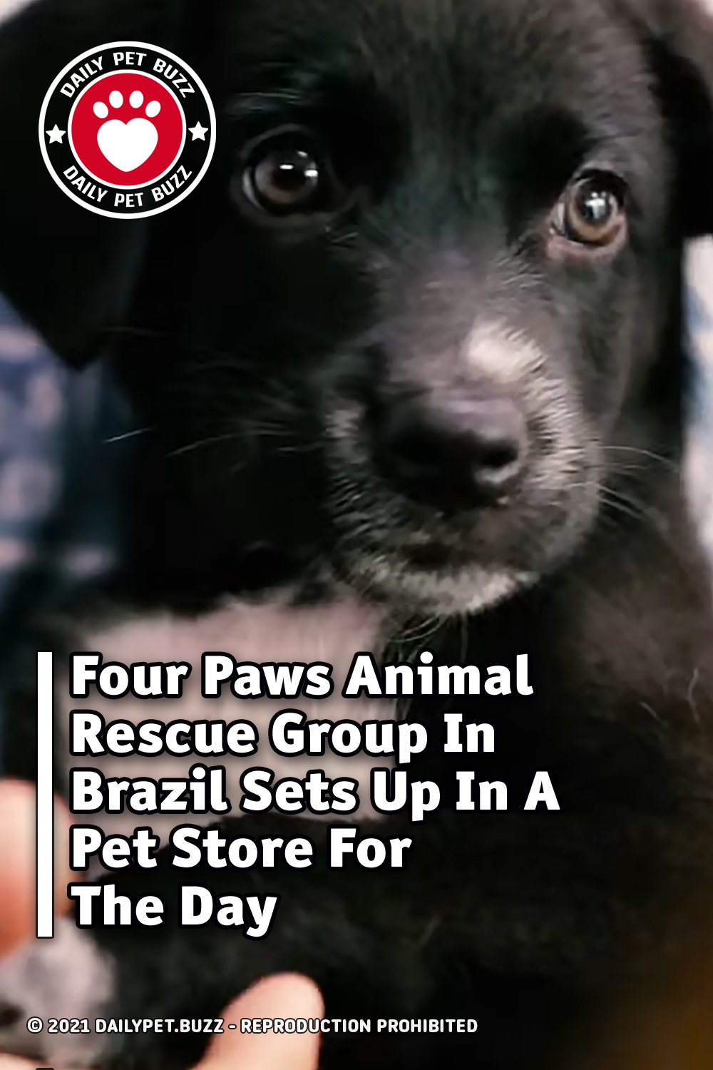 Four Paws Animal Rescue Group In Brazil Sets Up In A Pet Store For The Day