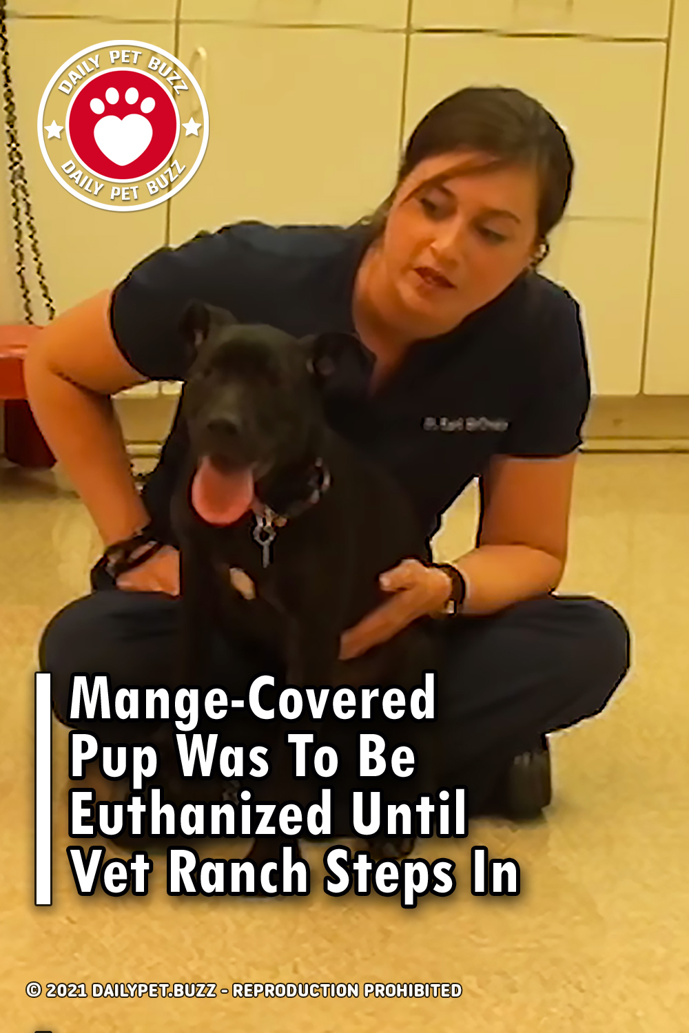 Mange-Covered Pup Was To Be Euthanized Until Vet Ranch Steps In
