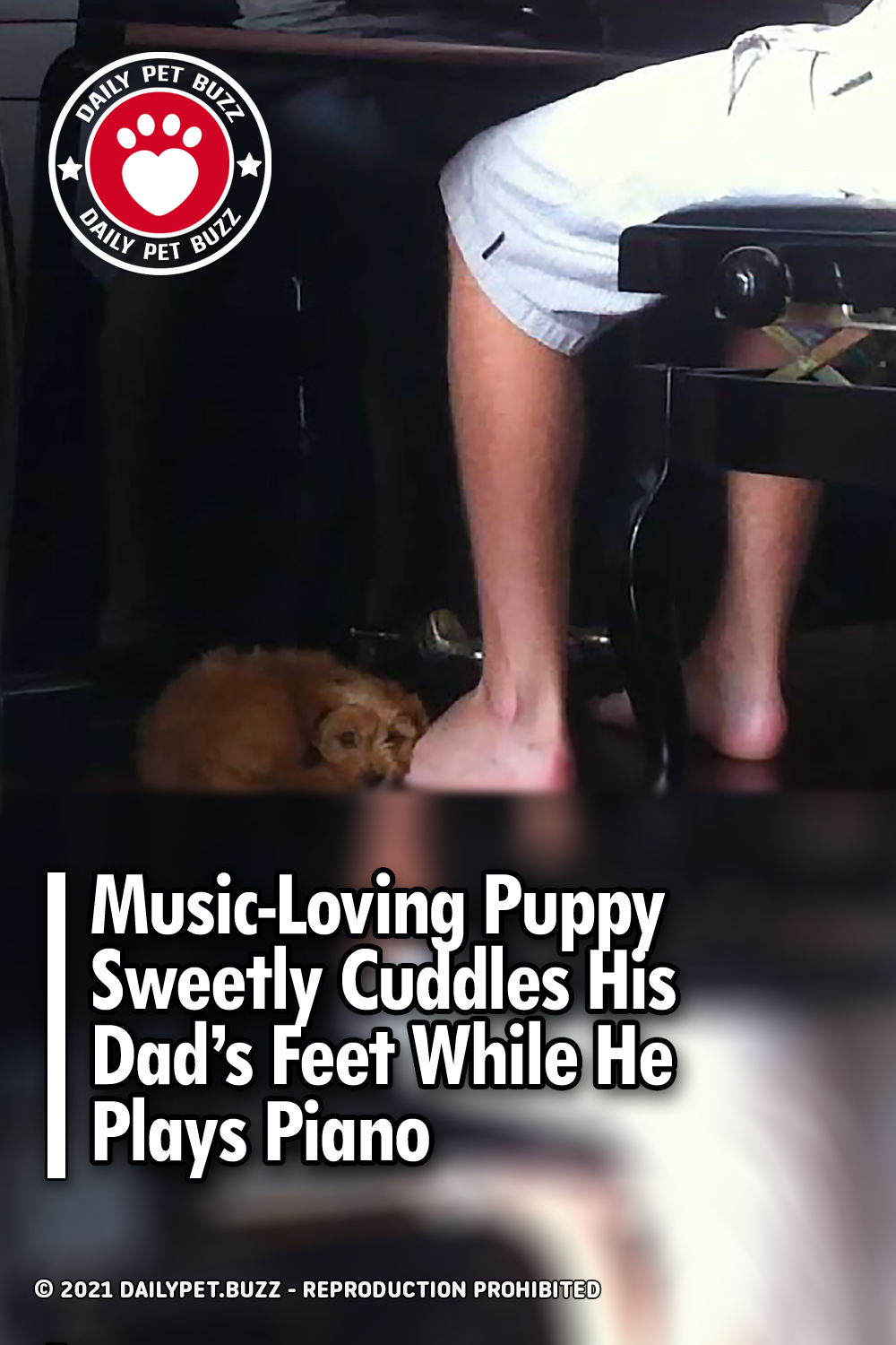 Music-Loving Puppy Sweetly Cuddles His Dad\'s Feet While He Plays Piano