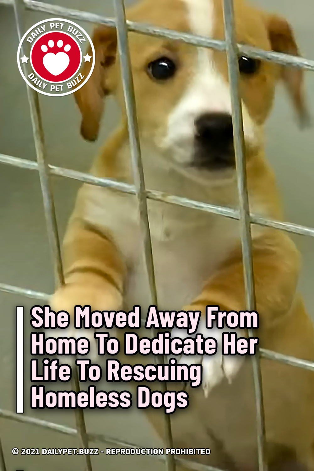 She Moved Away From Home To Dedicate Her Life To Rescuing Homeless Dogs