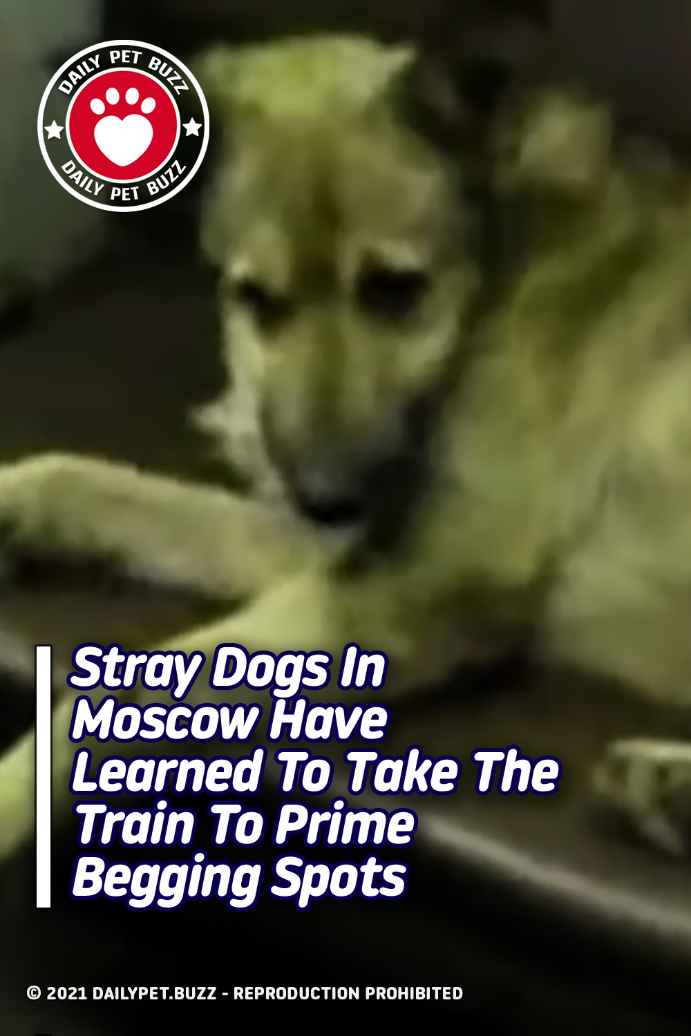 Stray Dogs In Moscow Have Learned To Take The Train To Prime Begging Spots