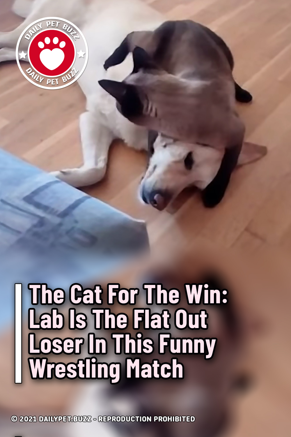 The Cat For The Win: Lab Is The Flat Out Loser In This Funny Wrestling Match