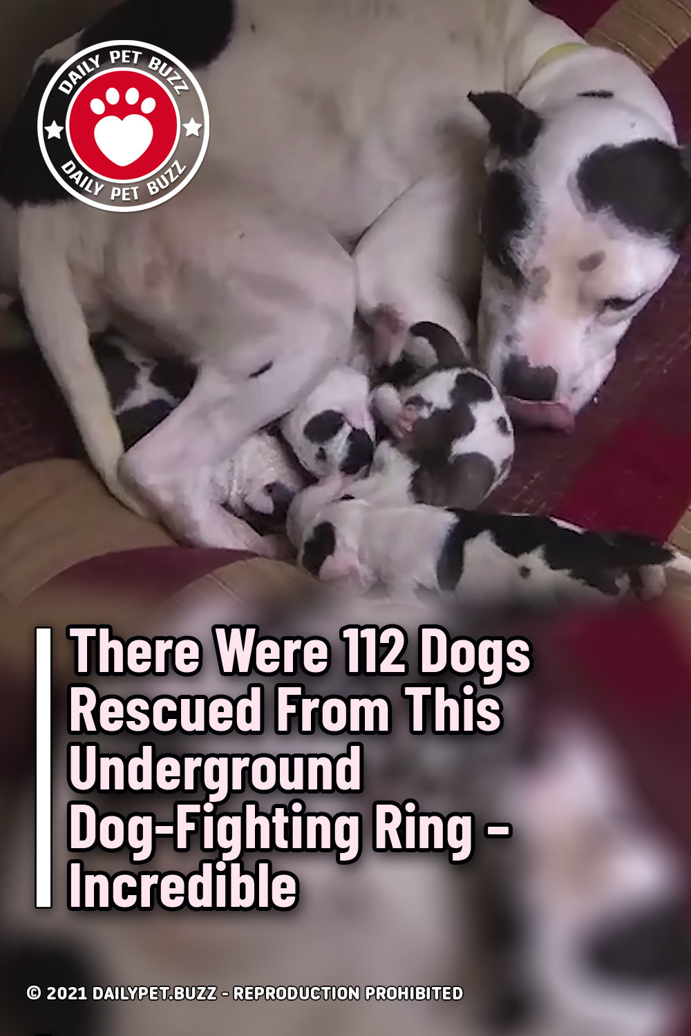 There Were 112 Dogs Rescued From This Underground Dog-Fighting Ring – Incredible