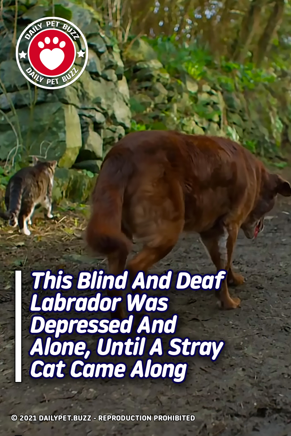 This Blind And Deaf Labrador Was Depressed And Alone Until A Stray Cat Came Along