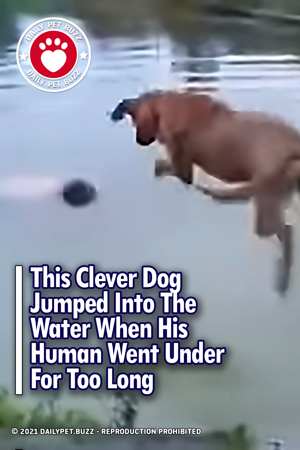 This Clever Dog Jumped Into The Water When His Human Went Under For Too Long
