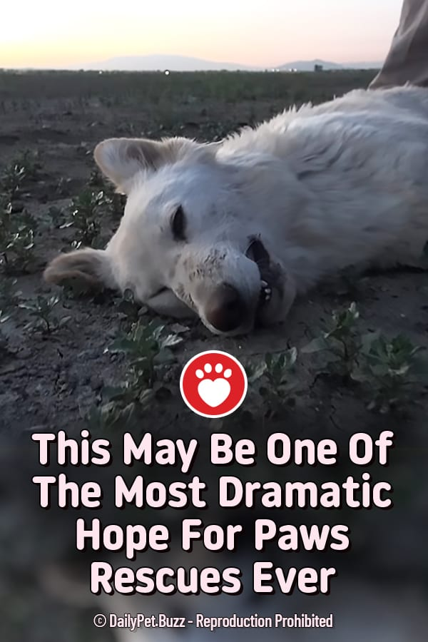 This May Be One Of The Most Dramatic Hope For Paws Rescues Ever