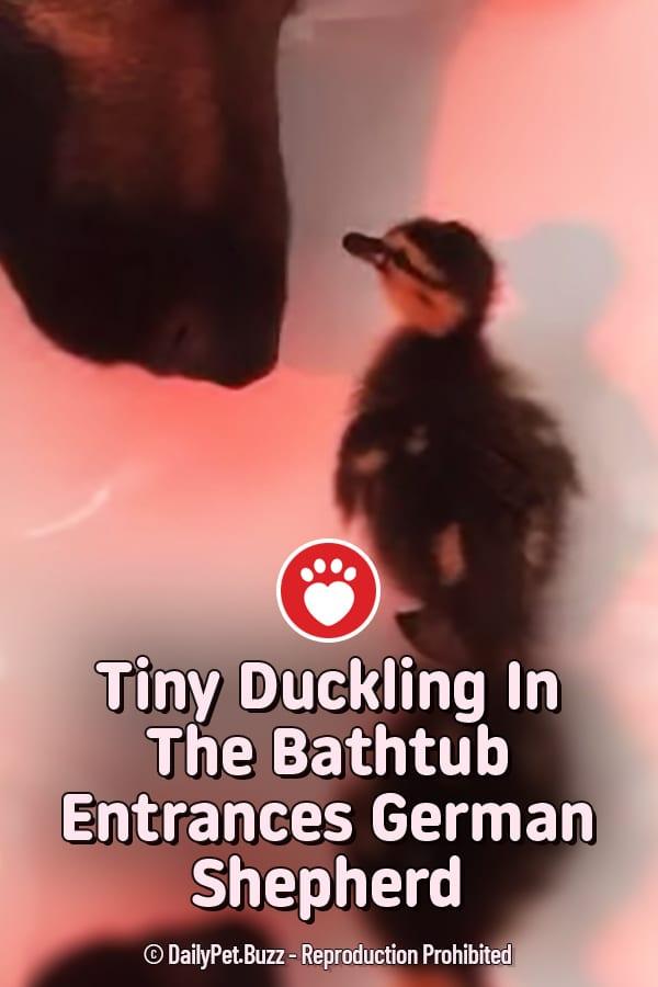 Tiny Duckling In The Bathtub Entrances German Shepherd