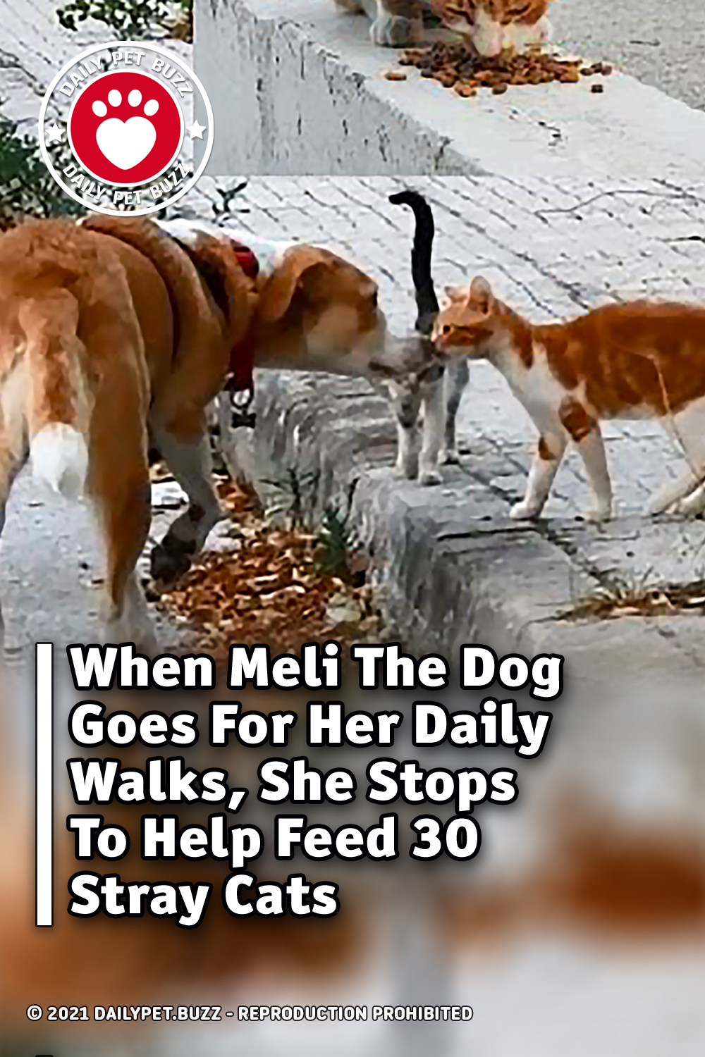 When Meli The Dog Goes For Her Daily Walks, She Stops To Help Feed 30 Stray Cats