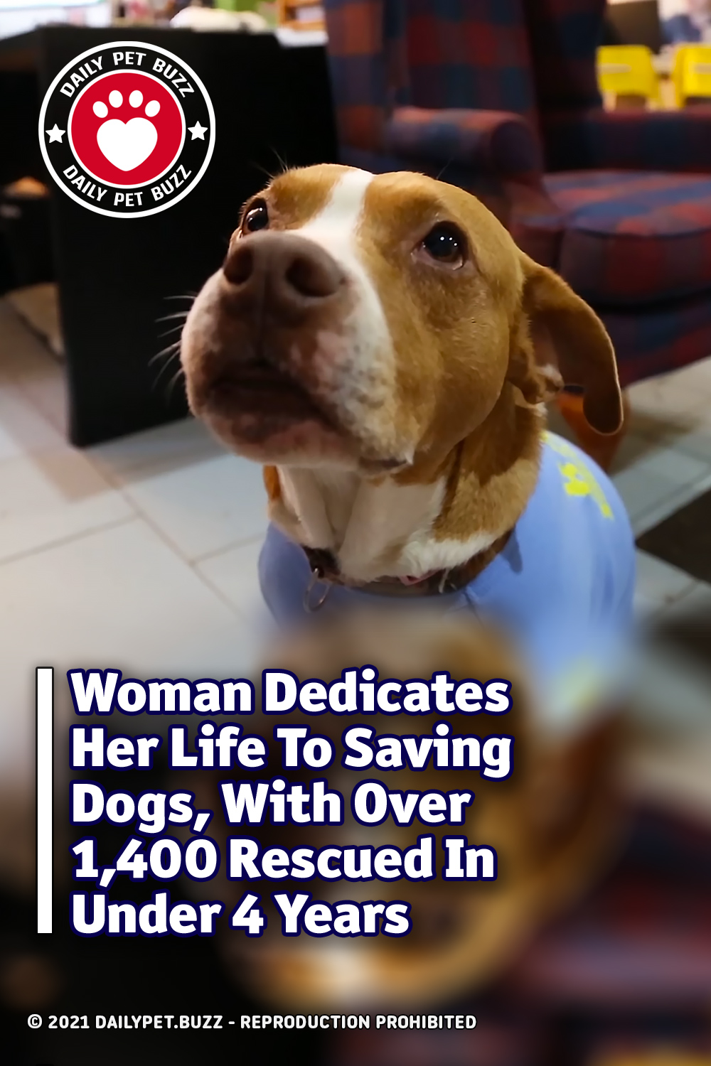 Woman Dedicates Her Life To Saving Dogs, With Over 1,400 Rescued In Under 4 Years