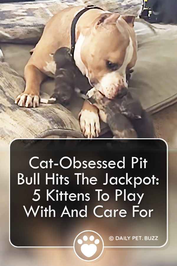 Cat-Obsessed Pit Bull Hits The Jackpot: 5 Kittens To Play With And Care For