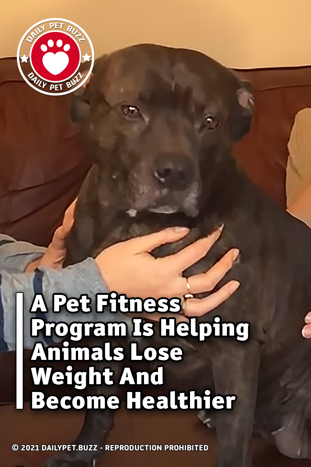 A Pet Fitness Program Is Helping Animals Lose Weight And Become Healthier