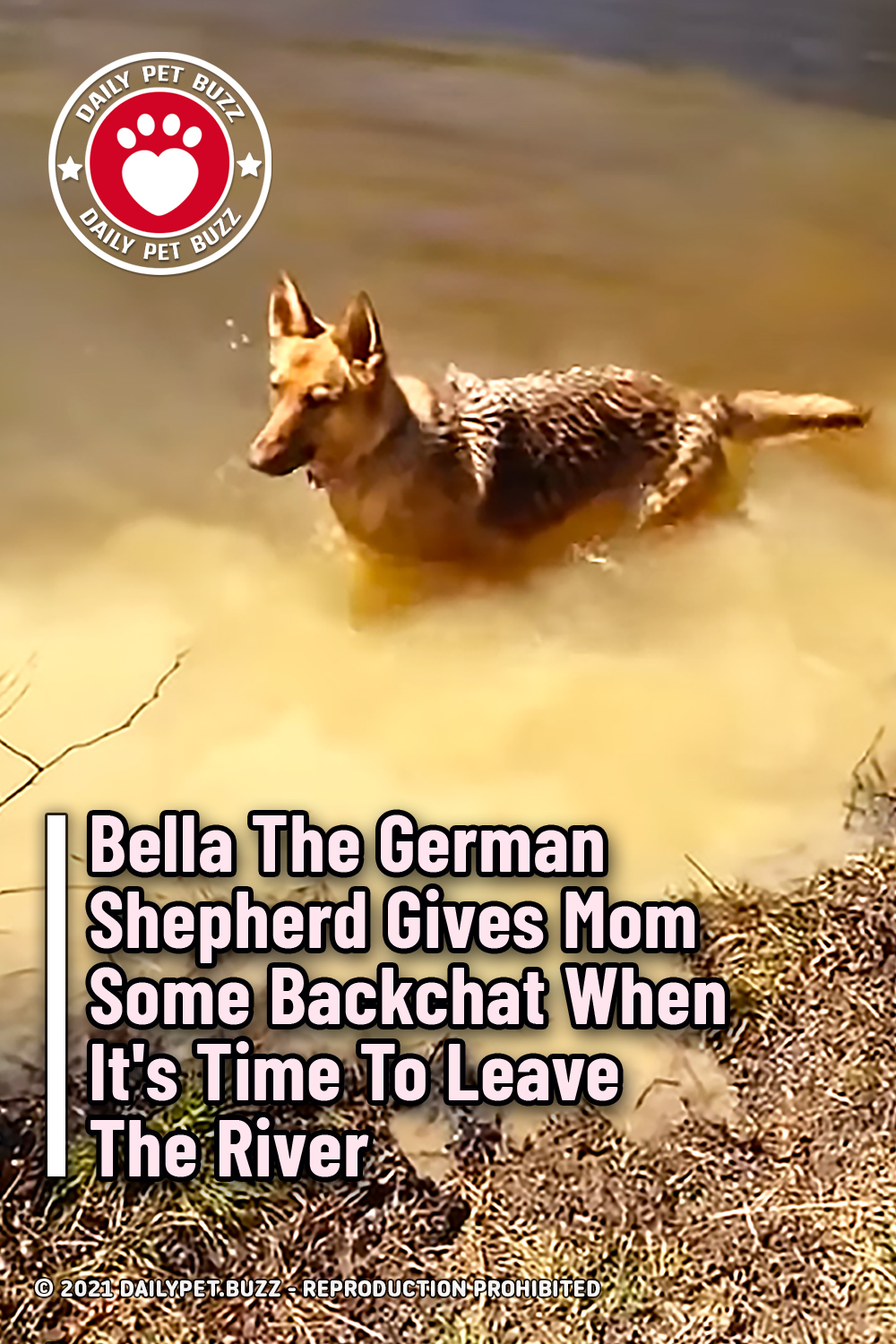 Bella The German Shepherd Gives Mom Some Backchat When It\'s Time To Leave The River