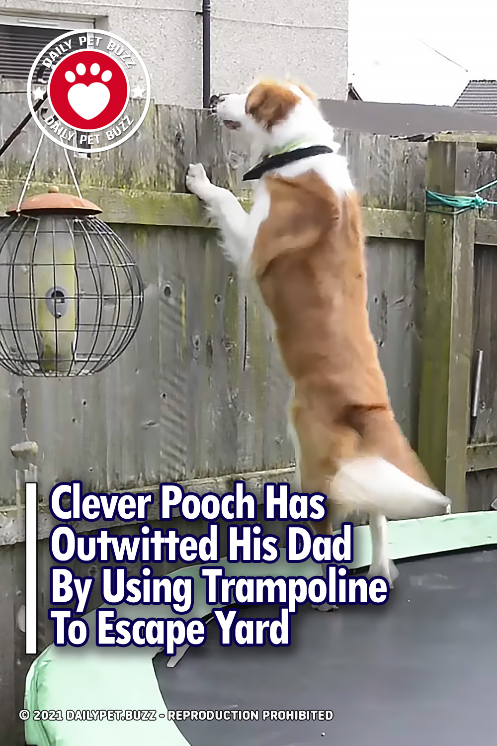 Clever Pooch Has Outwitted His Dad By Using Trampoline To Escape Yard