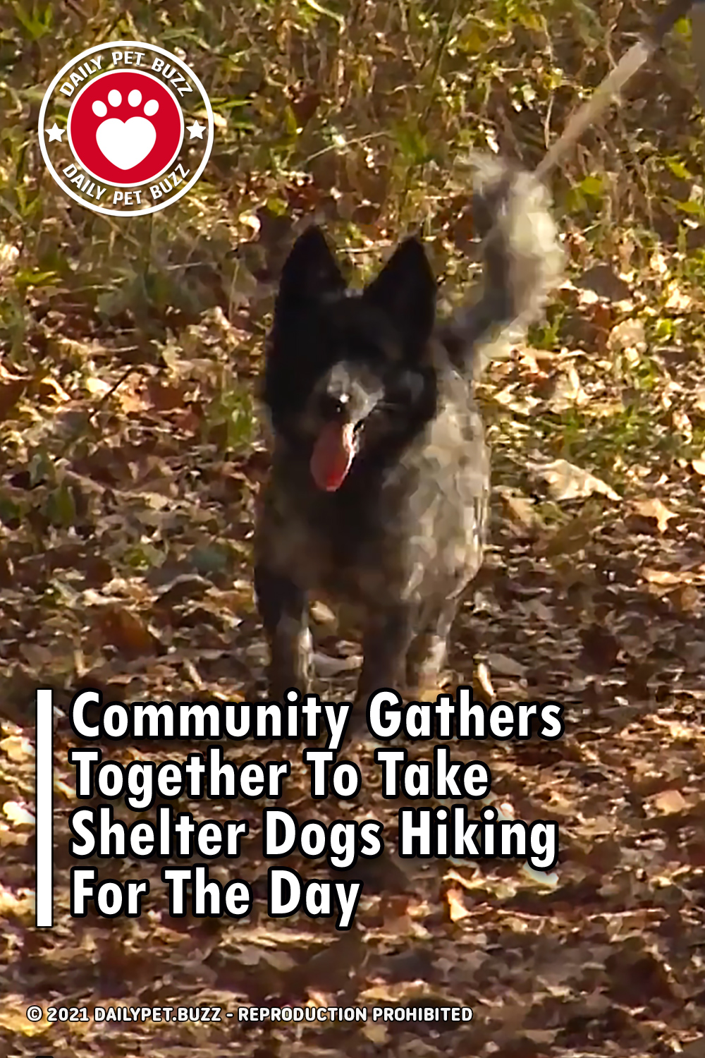 Community Gathers Together To Take Shelter Dogs Hiking For The Day