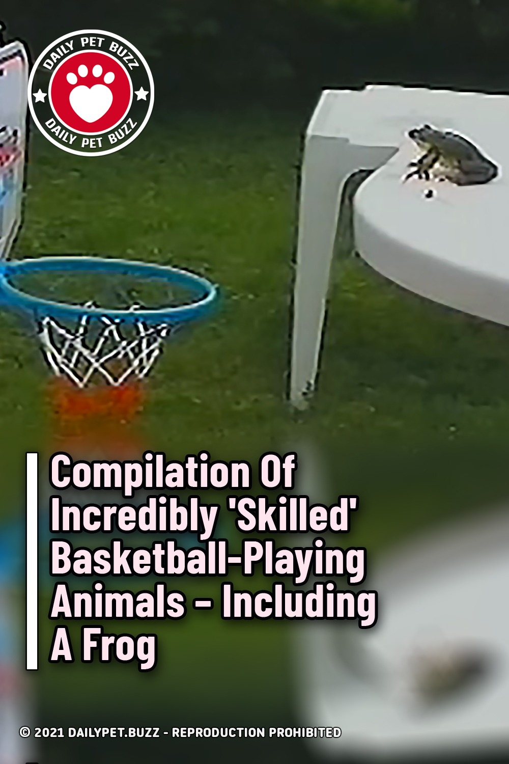 Compilation Of Incredibly \'Skilled\' Basketball-Playing Animals – Including A Frog
