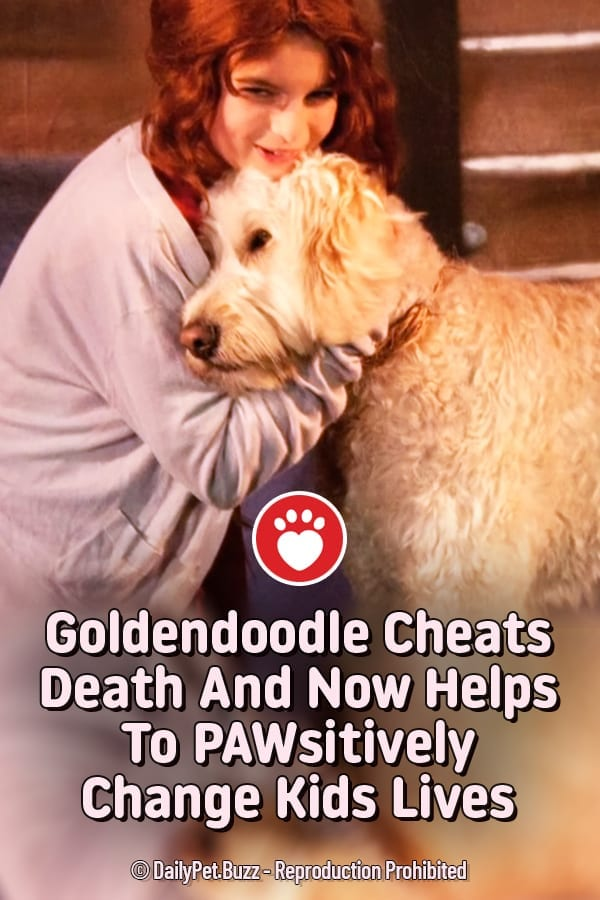 Goldendoodle Cheats Death And Now Helps To PAWsitively Change Kids Lives