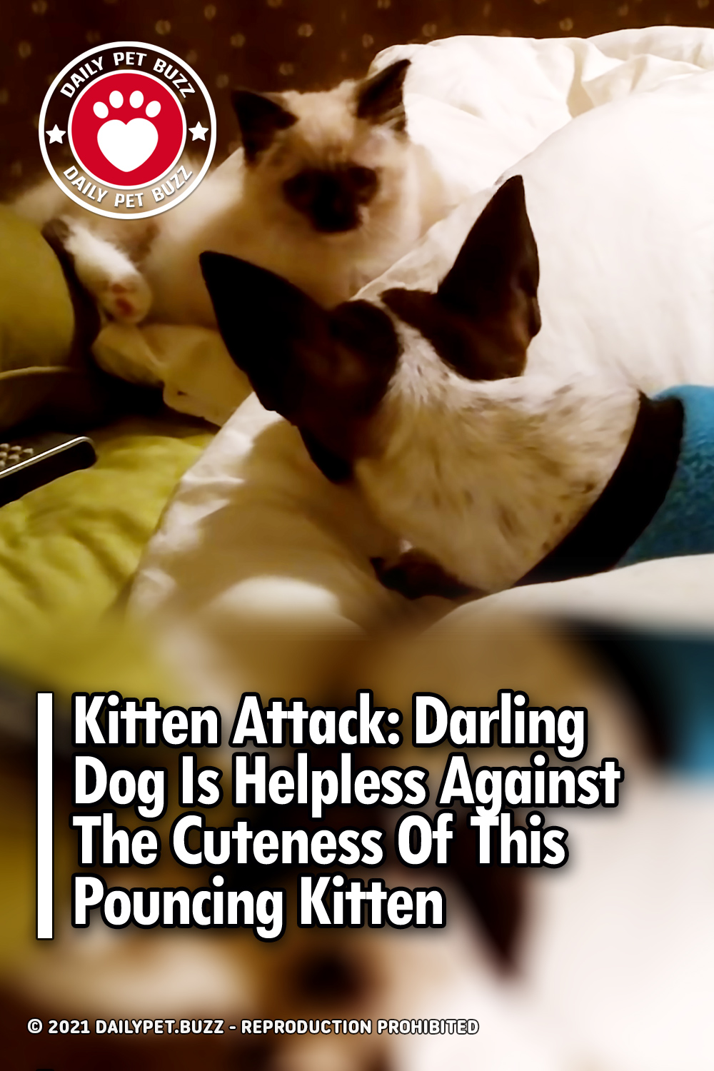 Kitten Attack: Darling Dog Is Helpless Against The Cuteness Of This Pouncing Kitten