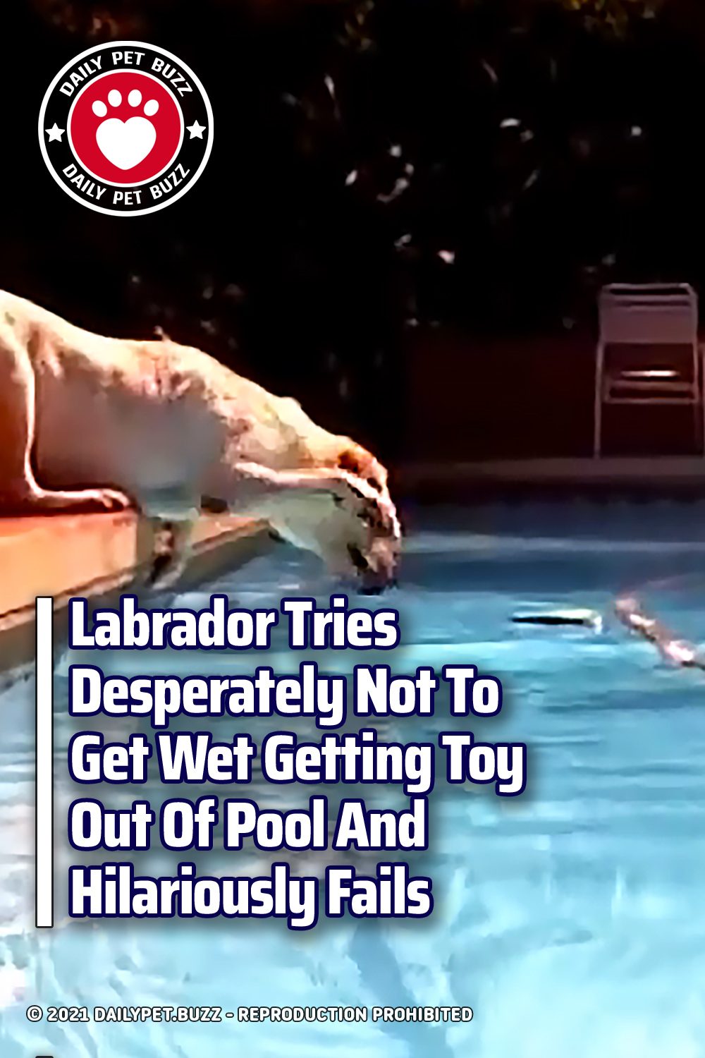 Labrador Tries Desperately Not To Get Wet Getting Toy Out Of Pool And Hilariously Fails