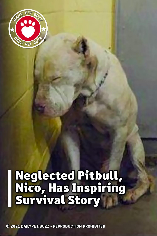 Neglected Pitbull, Nico, Has Inspiring Survival Story