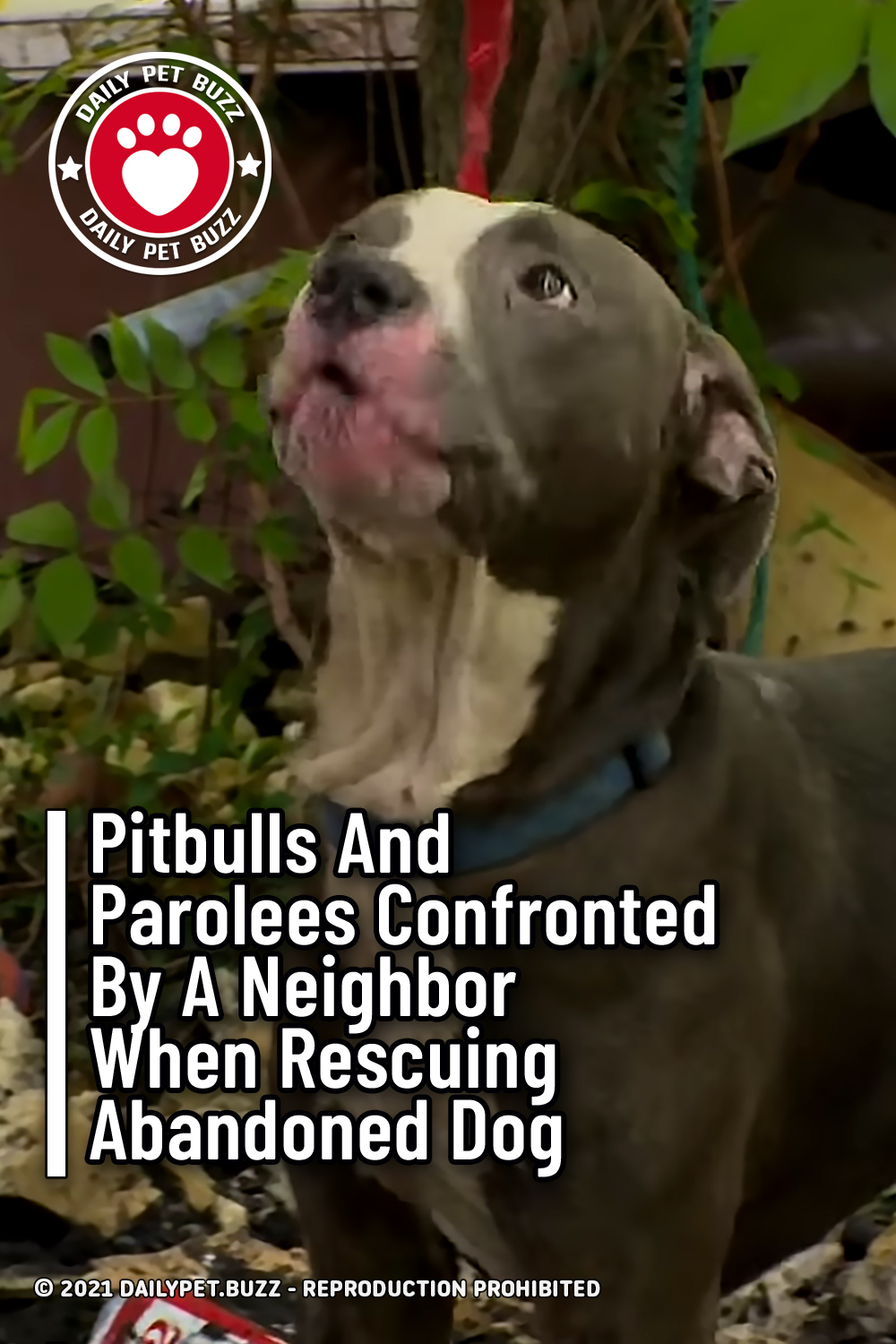 Pitbulls And Parolees Confronted By A Neighbor When Rescuing Abandoned Dog