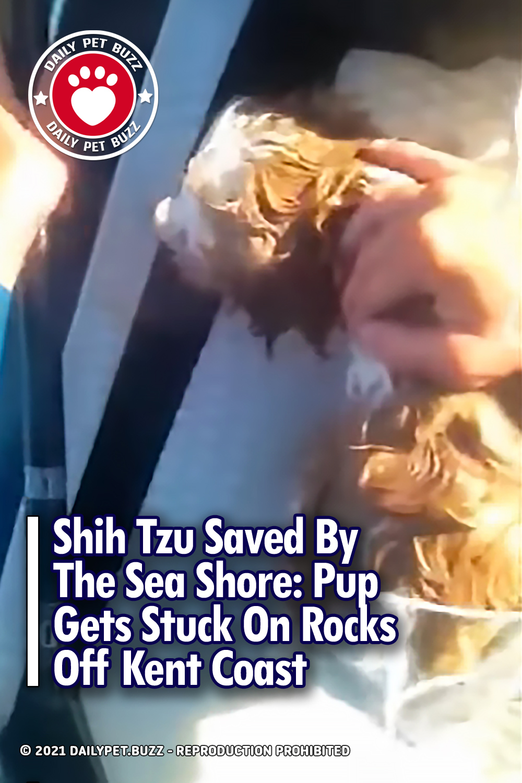 Shih Tzu Saved By The Sea Shore: Pup Gets Stuck On Rocks Off Kent Coast