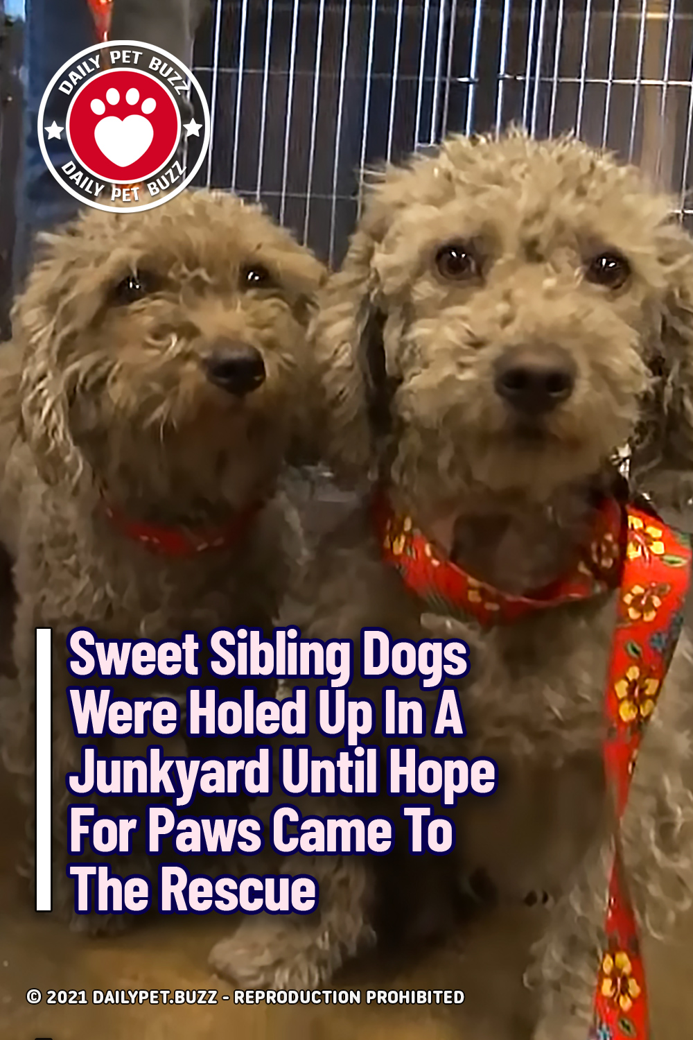 Sweet Sibling Dogs Were Holed Up In A Junkyard Until Hope For Paws Came To The Rescue