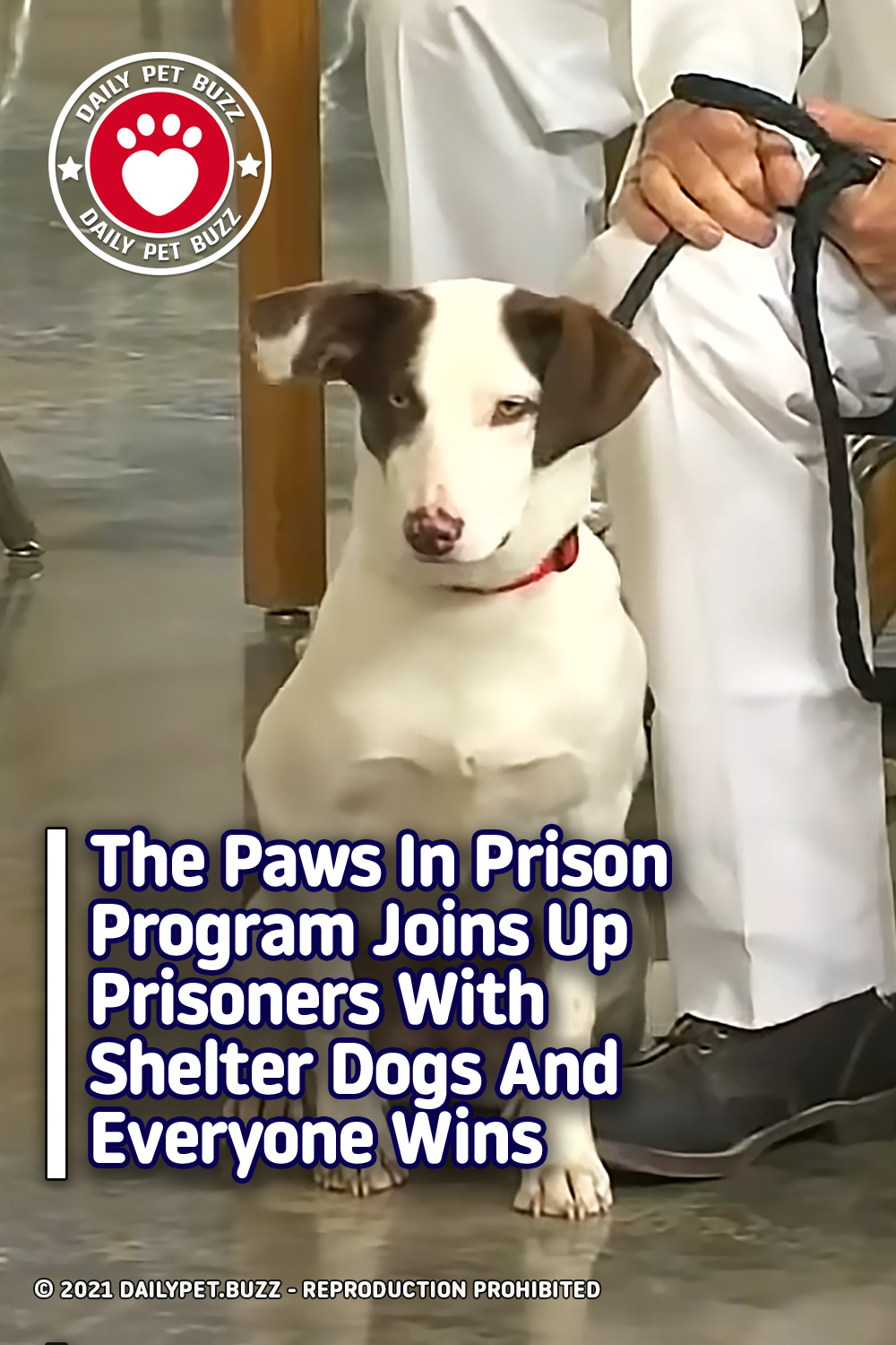 The Paws In Prison Program Joins Up Prisoners With Shelter Dogs And Everyone Wins
