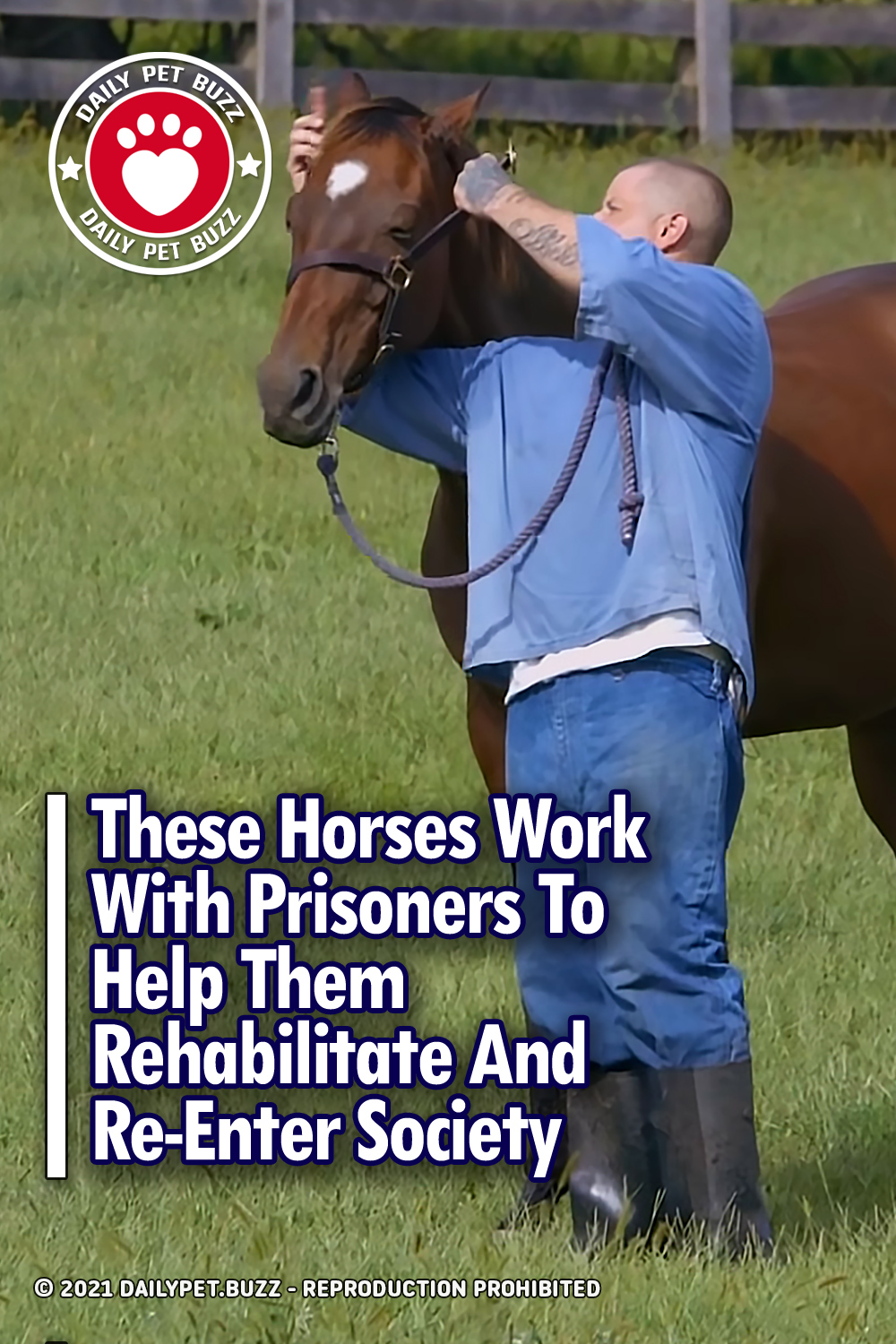 These Horses Work With Prisoners To Help Them Rehabilitate And Re-Enter Society