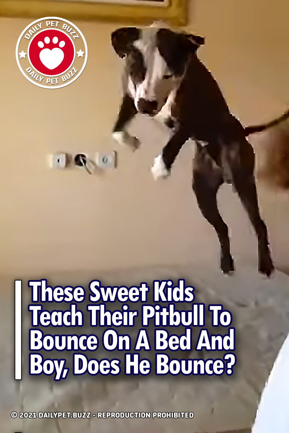 These Sweet Kids Teach Their Pitbull To Bounce On A Bed And Boy, Does He Bounce?