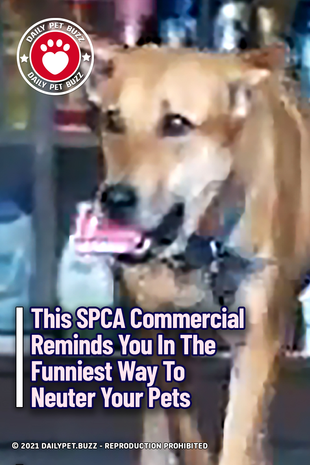 This SPCA Commercial Reminds You In The Funniest Way To Neuter Your Pets