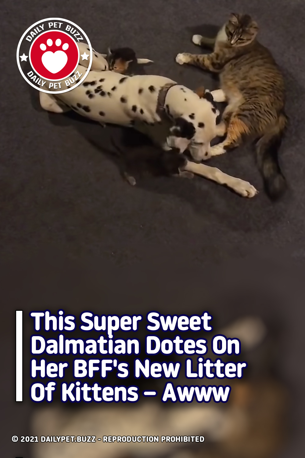This Super Sweet Dalmatian Dotes On Her BFF\'s New Litter Of Kittens – Awww