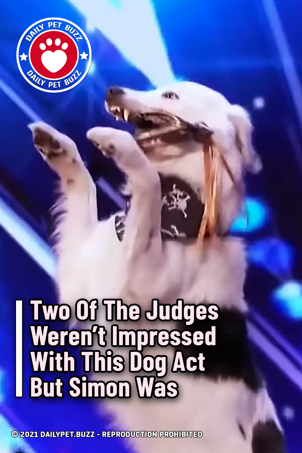 Two Of The Judges Weren\'t Impressed With This Dog Act But Simon Was