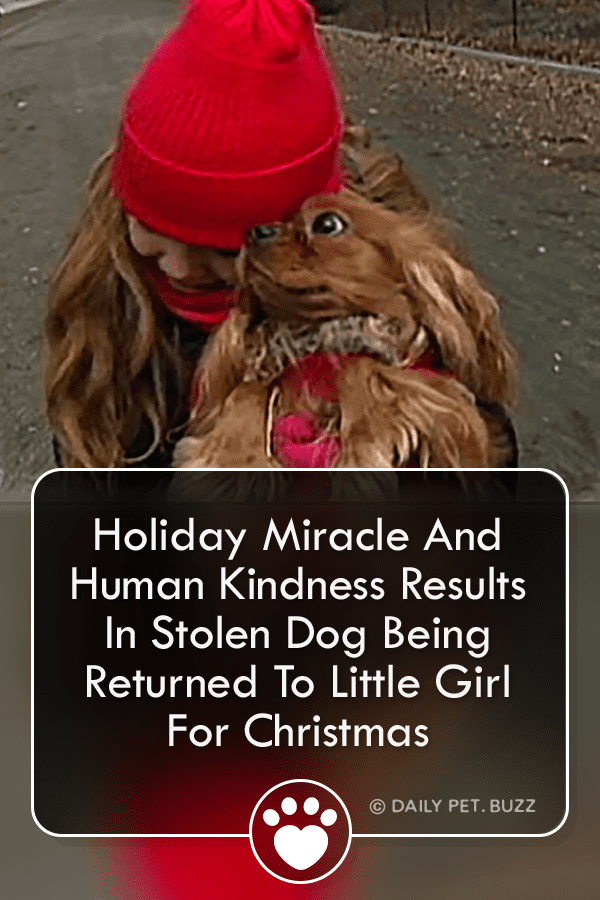 Holiday Miracle And Human Kindness Results In Stolen Dog Being Returned To Little Girl For Christmas