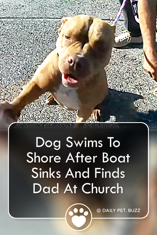 Dog Swims To Shore After Boat Sinks And Finds Dad At Church